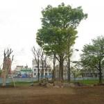 樹木の成長が楽しみです