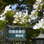日本で95回目の春を迎えました